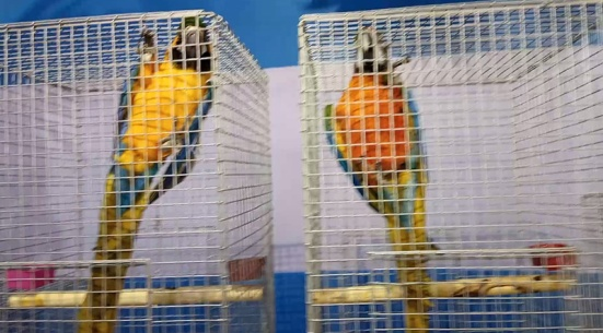 bird-mela-3