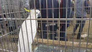 bird-mela-5